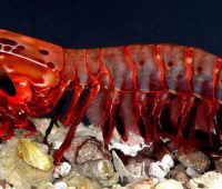 Donde viven los Crustaceos?