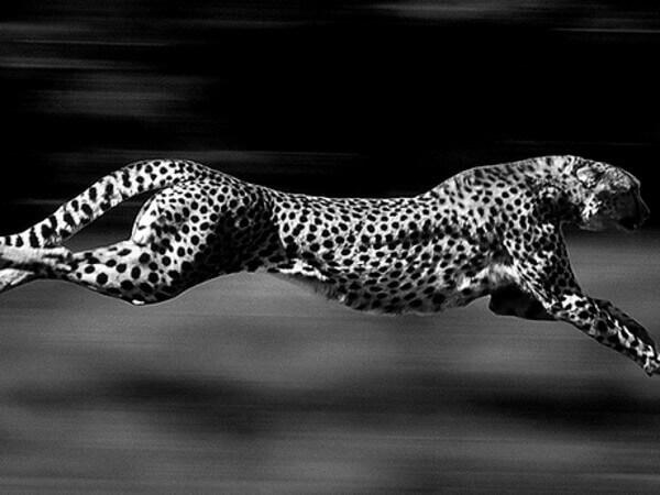 habitat-de-los-guepardos
