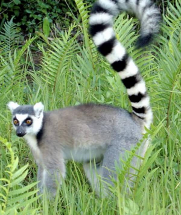 donde-viven-los-lemures