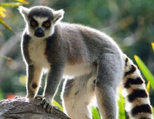 habitat-de-los-lemures