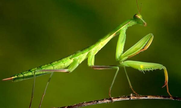 habitat-de-la-mantis-religiosa